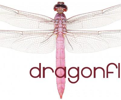 Dragonfly Logo