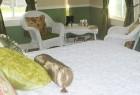 Oxford Inn Guest Room